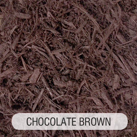 CHOCOLATE BROWN TITLED